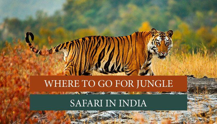 go here for jungle safari in India