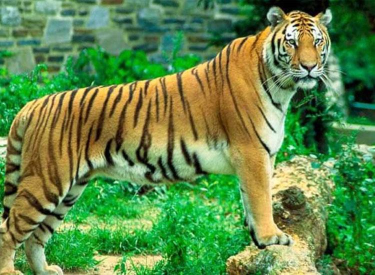 Sariska Tiger Reserve Famous | Wildlife Parks in Rajasthan