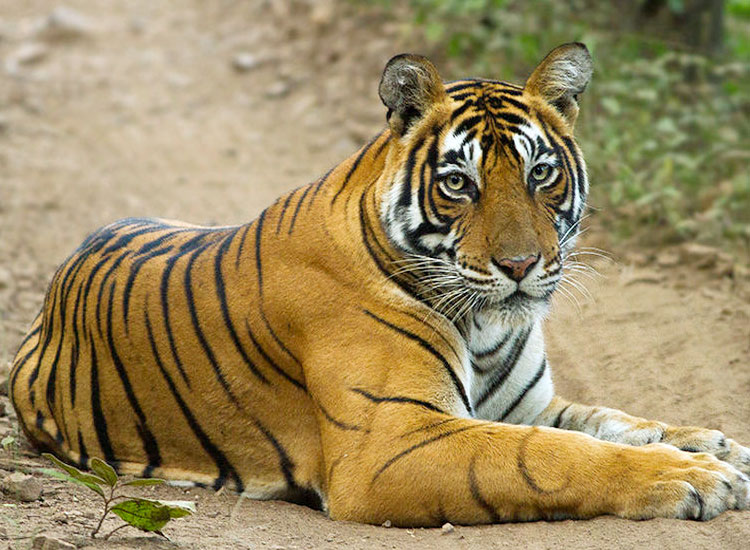 Ranthambore Park |  Best Places to Visit in Rajasthan