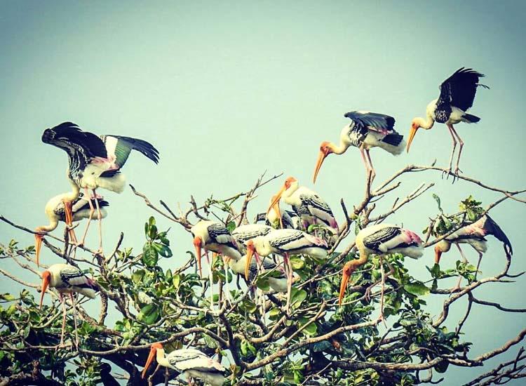 bird watching kumarakom