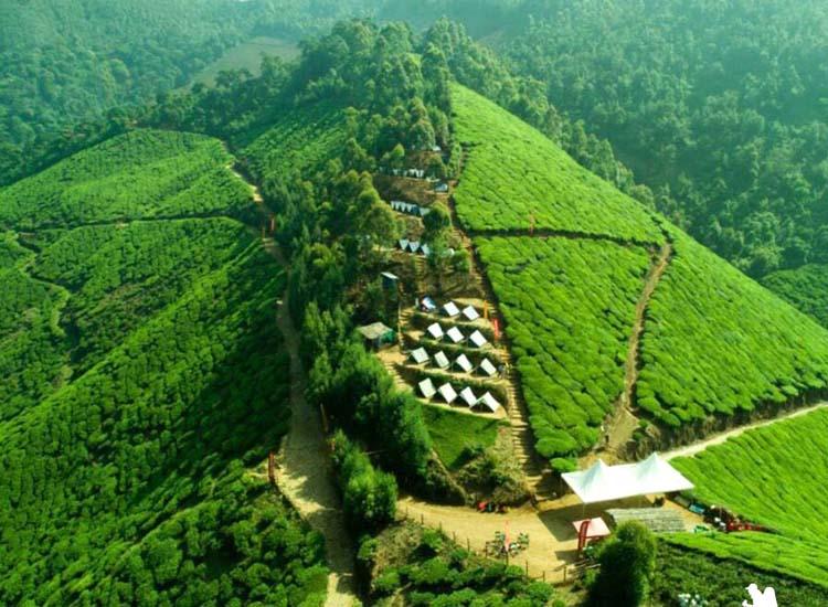 kolukkumalai tea plantation