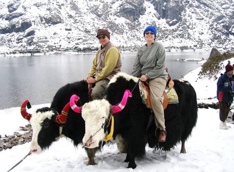 Honeymoon couple is enjoying Yak safari in gangtok