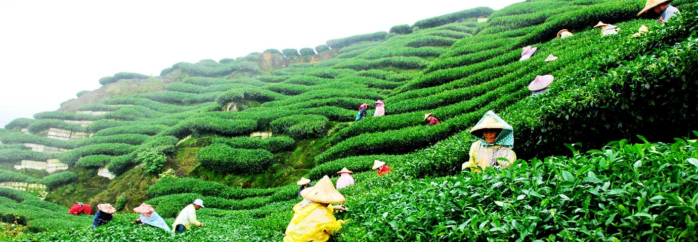 tourism in darjeeling things to do in west bengal