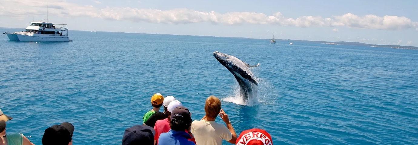 Dolphin watching Goa
