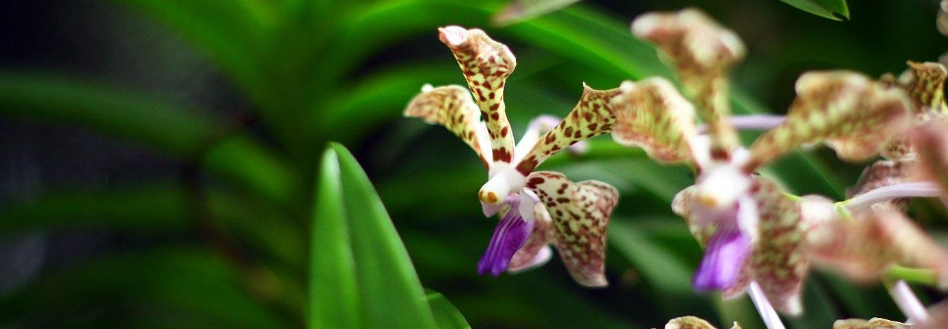 India Orchidarium Botanical Garden